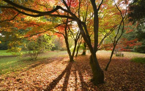 Autumn Equinox 2021: the science behind the changing seasons