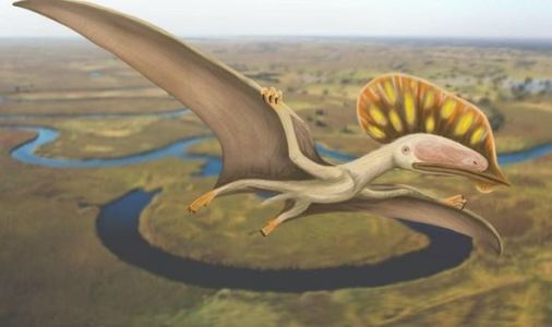 Dinosaurs in the UK: Britain's first pterodactyl remains found on the Isle of Wight