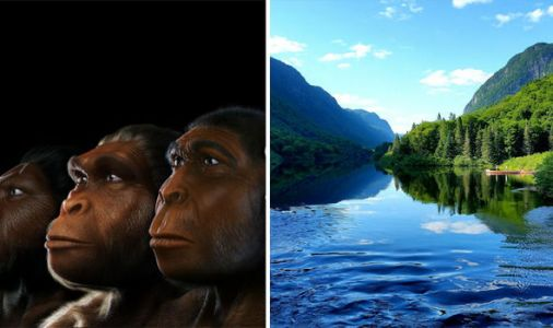 Evolution BOMBSHELL: Humans evolved from SEMI-AQUATIC apes, claim scientists