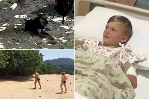 Boy, 7, on family trip to Thailand mauled by wild dogs in front of horrified dad