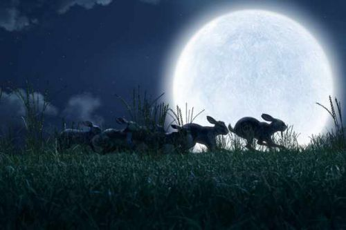 When is Watership Down on BBC1 and Netflix?