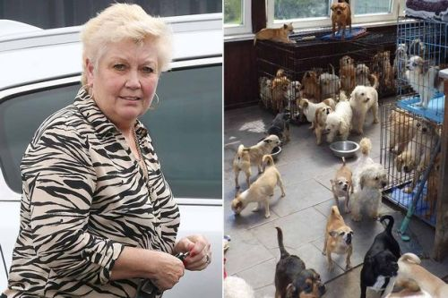 Dog breeder facing jail after keeping 100 animals in shocking conditions