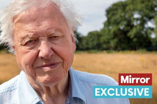 Sir David Attenborough's new series The Mating Game to explore animal dating scene