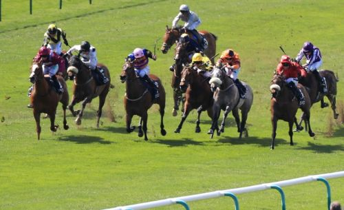 Antepost punt: Major Jumbo can defy big weight to win the Ayr Gold Cup on Saturday