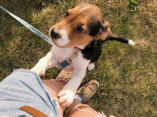 I'm a pet sitter whose business has been decimated by COVID-19 - here's what I'm doing to protect myself and stay afloat financially