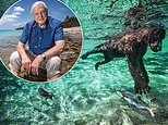 CHRISTOPHER STEVENS previews David Attenborough's new Netflix series Our Planet