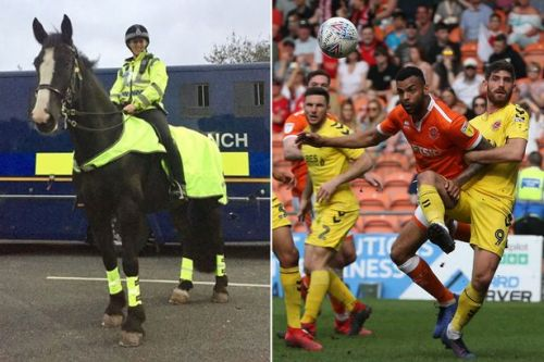 Horror as police horse dies being speared through stomach at football match