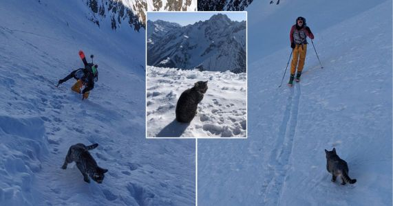 Lost cat follows hikers to top of 3,000 metre mountain