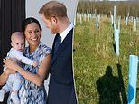 Prince Harry and Meghan Markle fans unveil 'Archie's woods' after campaign for Sussex Great Forest