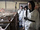 Actress Rooney Mara tells of 'awful' and 'devastating' conditions inside British animal farms