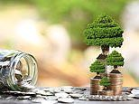 Should you invest in green bonds?