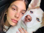 Leo DiCaprio's girlfriend Camila Morrone shows off growing husky pup Jack in Instagram photos