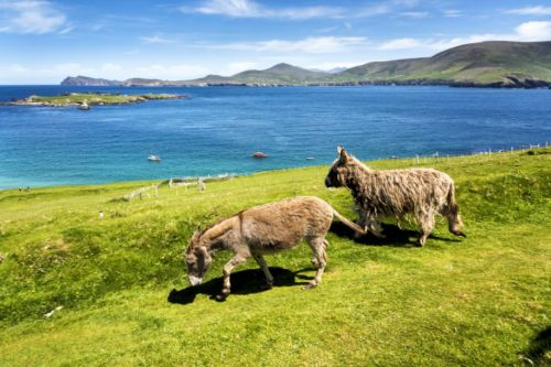 A Remote Island In Ireland Has The ULTIMATE Dream Job But It Comes With A Slight Catch