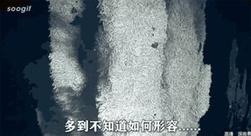Films taken from 2000m sea floor by China's manned submersible