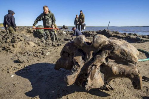 Amazingly well-preserved 10,000 year old woolly mammoth pulled from Siberian lake