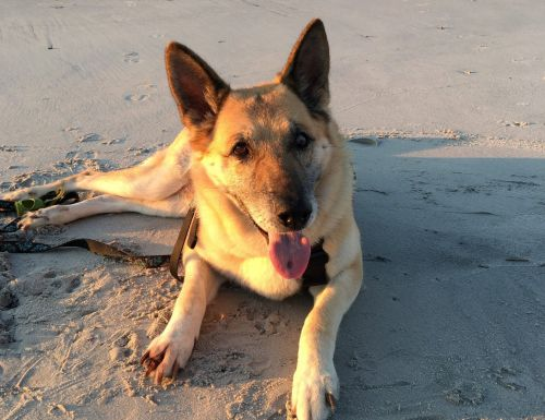 Terminally ill dog is completing a bucket list before she dies
