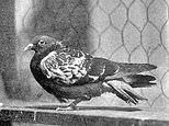 Archive documents up for auction tell how US soldiers were rescued by carrier pigeon