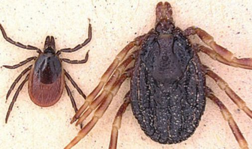MONSTER ticks found in Germany threaten Europe with DEADLY disease Crimean-Congo fever