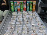 Man pleads guilty to trying to smuggle live coral out of the US in Pringles cans