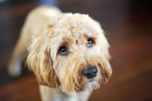 Radio DJ to calm your pets with soothing shows ahead of Guys Fawkes