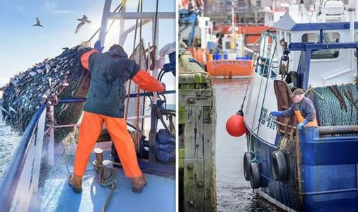 Brexit news: How much catch do British fisherman THROW AWAY thanks to EU laws?