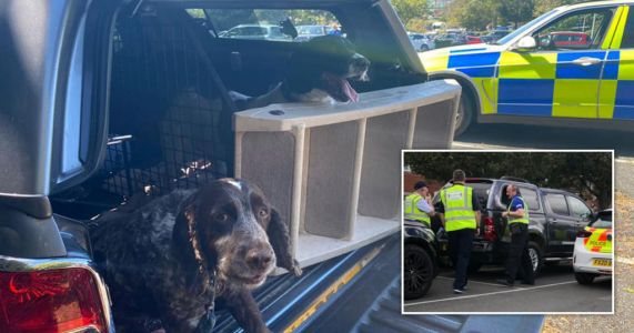 Anger as dogs have to be rescued from hot cars over sweltering weekend