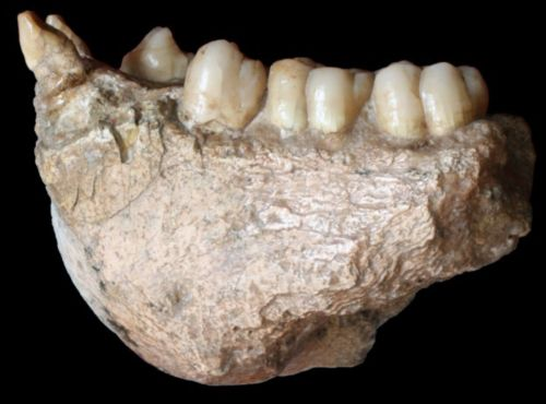 Giant ape fossil discovery could help scientists to rewrite the story of human evolution