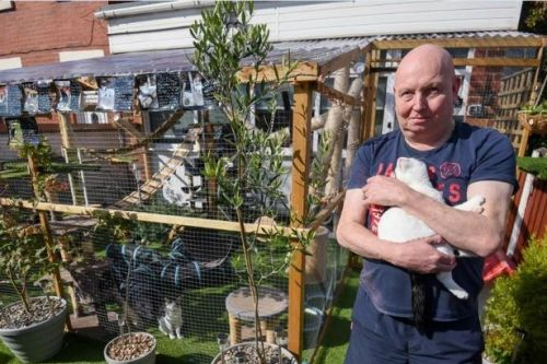 Couple fear giant jungle gym for their 10 cats will be destroyed after complaints