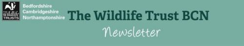 BCN Wildlife Trust newsletter November 2019