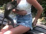 Moment a macaque tries to undo shocked woman tourist's shorts and then peers down her top