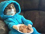 US embassy is red-faced after sending out an invitation to a 'cat pajama-jam'