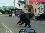 Bear is shot dead after injuring four people while rampaging through Japanese city