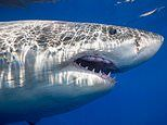 Half a million sharks may be killed in effort to make Covid vaccine, wildlife experts say