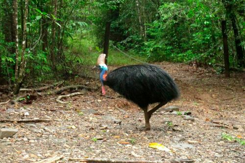 'World's deadliest bird' that clawed owner to death set to be auctioned off