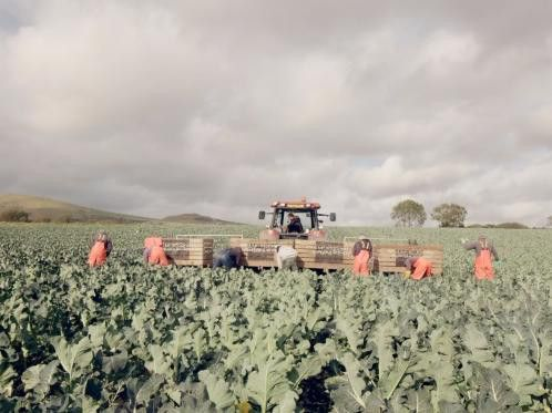Scottish food and drink firms benefit from Bidfood boost