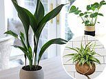 House plants that are almost impossible to kill