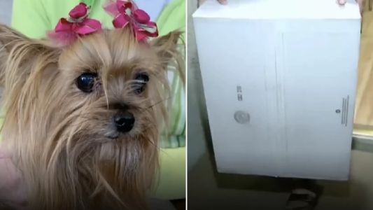 Yorkie died 'after courier threw box of crystal over family's wall and it hit her'