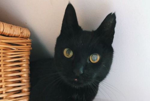 Black Cat Escapes From Cattery And Returns To Owners 8 Years Later