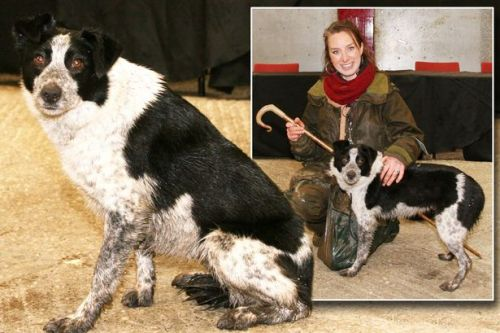 World's most expensive sheepdog sells for £18,900 to owner's astonishment
