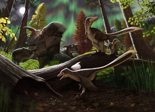 Bone fragment reveals new species of dinosaur that roamed the Arctic