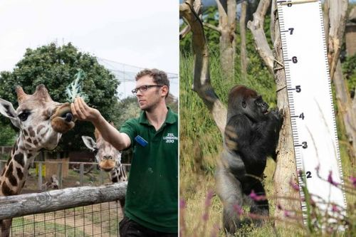 London Zoo is weighing all 19,000 of their animals - and the heaviest is 750kg