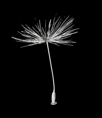 Drone makers may embrace flower power - because dandelions hold the key to flight
