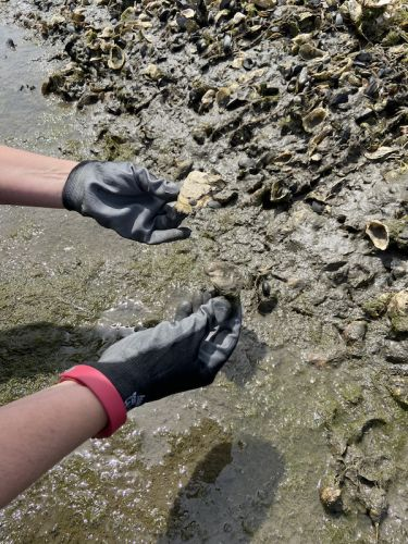 How oysters and seagrass could help the California coast adapt to rising seas