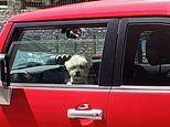 Dogs left in cars in Perth as temperatures soar to 35.7C