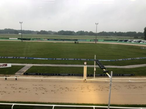 Behind the scenes at Greyhound Derby as Dorotas Wildcat aims for historic defence