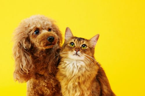 The science of why you're a dog person or a cat person
