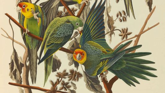The world's most beautiful book set for $8m sale
