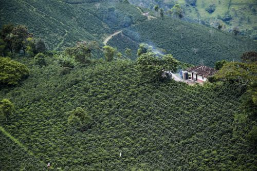 Colombian coffee farmers are paying the price for climate change