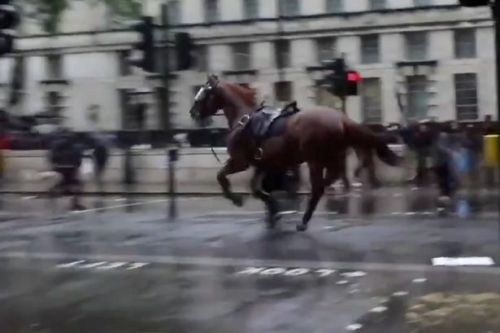 Black Lives Matter protester injured as police horse bolts after items hurled
