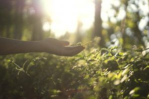 Why is organic beauty better for biodiversity?